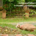 <b>แมวสอนธรรม</b>